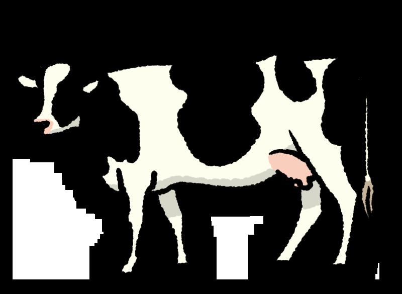 乳牛 ホルンスタイン 牛 大山 乳 リアル イラスト