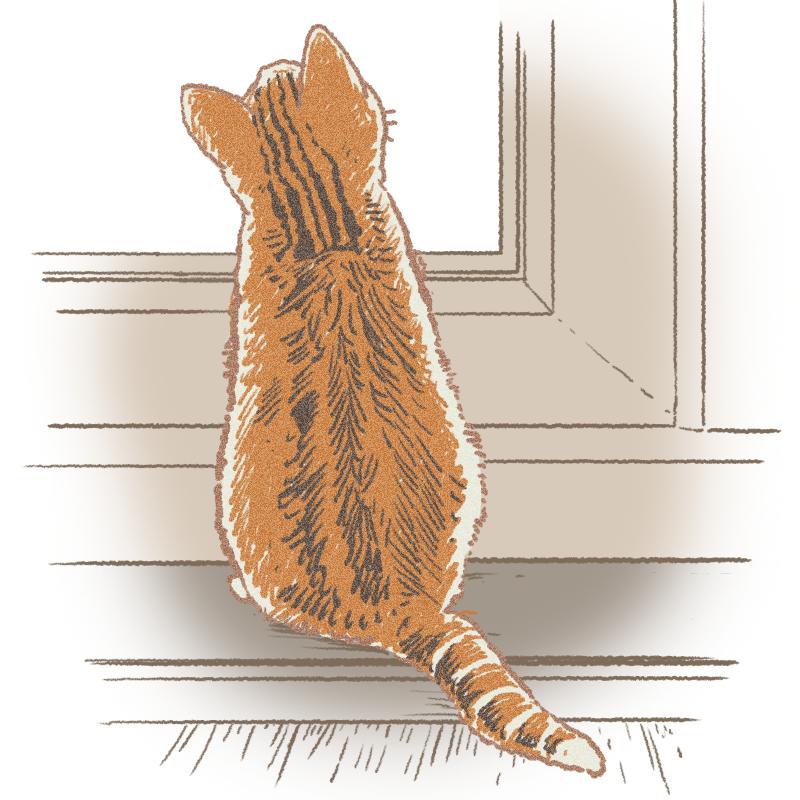 後ろ向きの子猫のイラスト