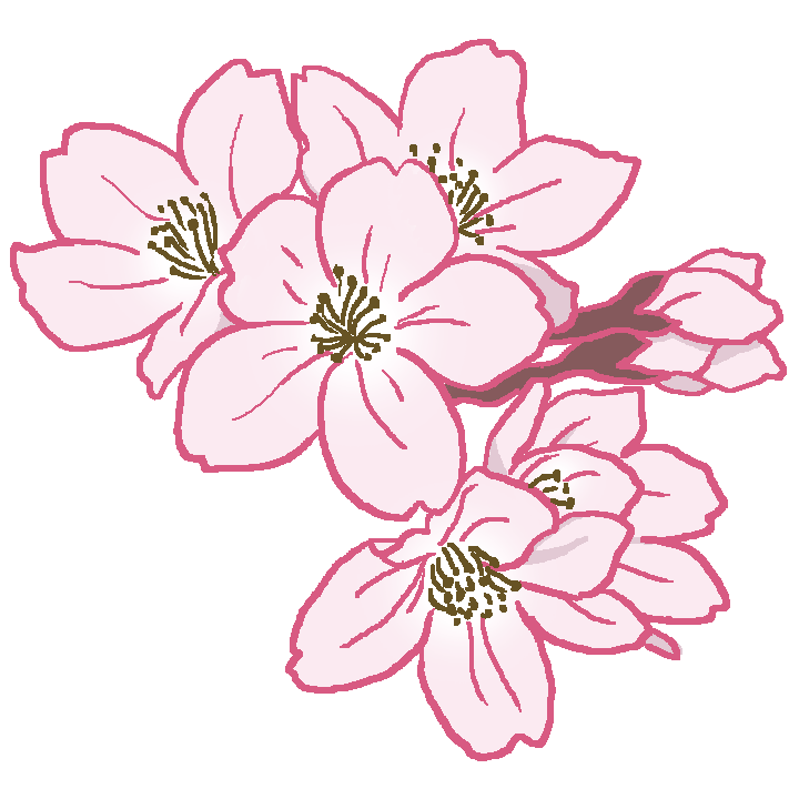 桜の花(ソメイヨシノ)のイラスト