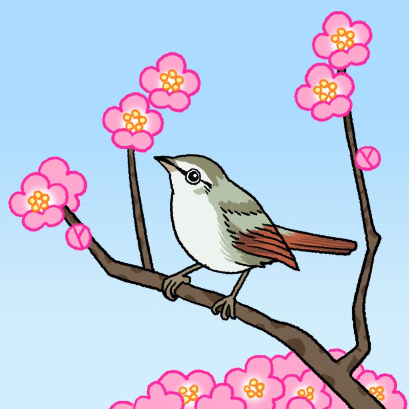 梅に鶯(ウグイス)のイラスト