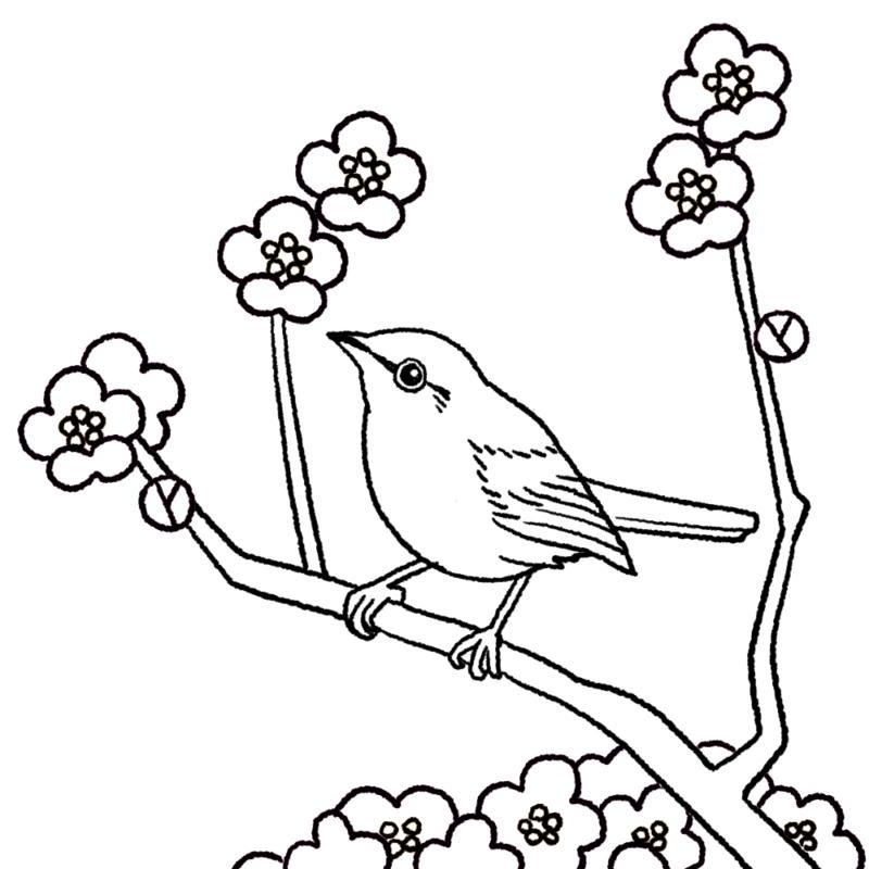 梅に鶯(ウグイス)のイラスト(ぬり絵)
