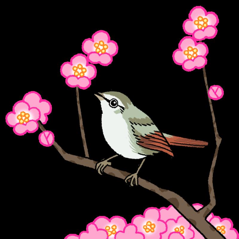 梅に鶯(ウグイス)のイラスト(背景なし)