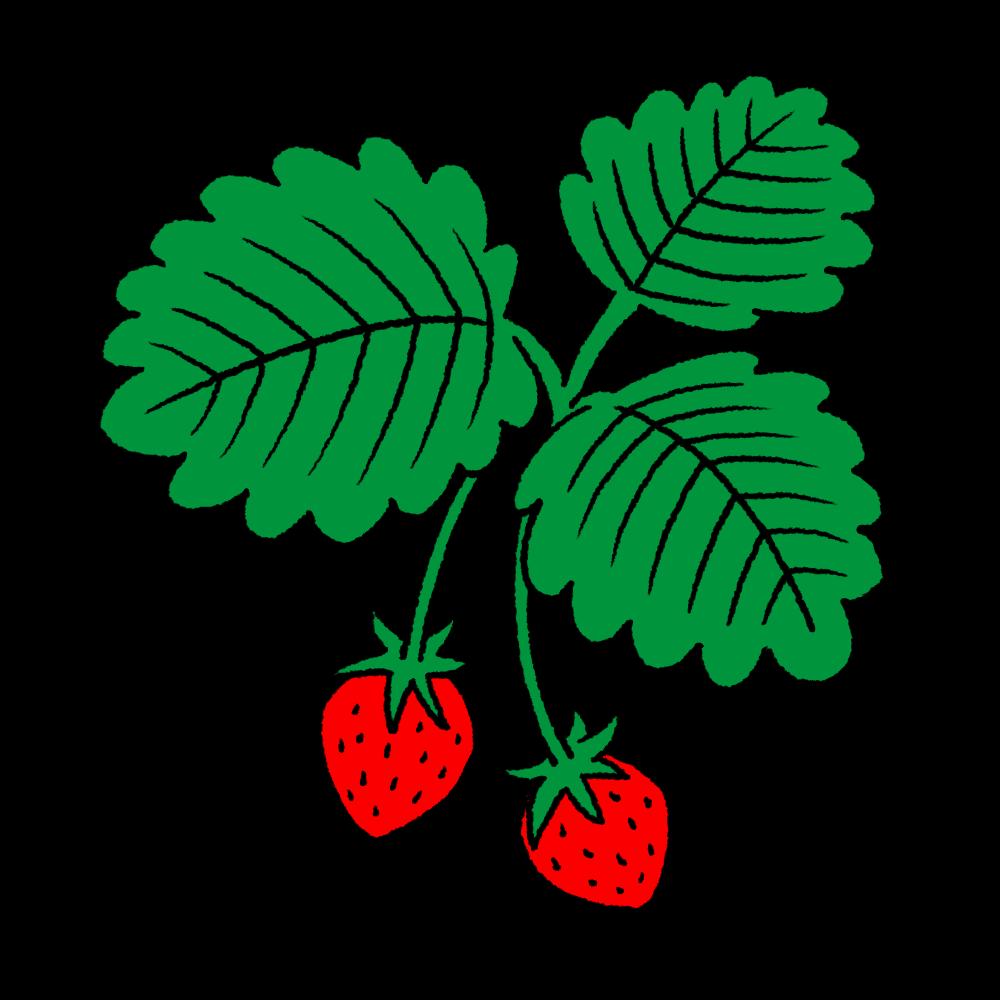 葉っぱ付きのいちごのイラスト