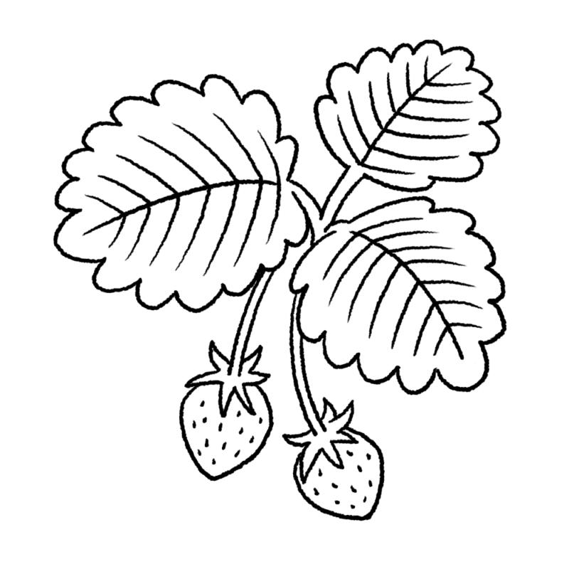 葉っぱ付きのいちごのイラスト(ぬり絵)