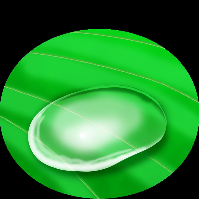 葉っぱに付いた水滴のイラスト