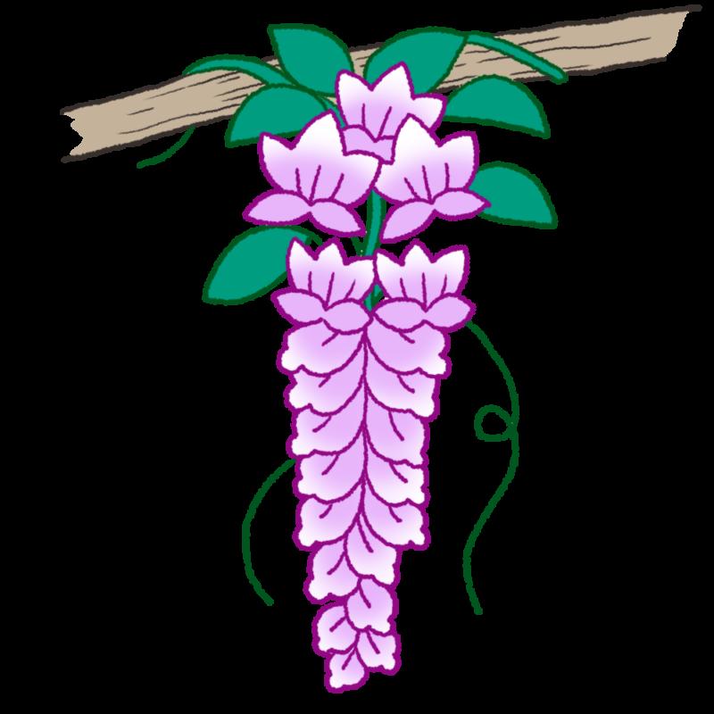 ふじの花のイラスト