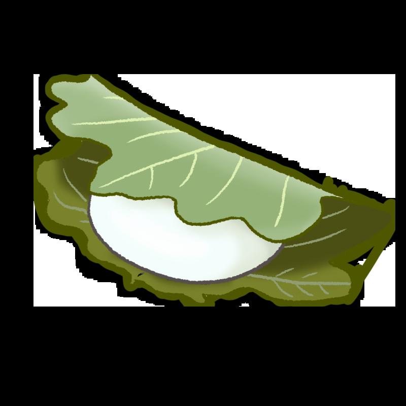 柏餅のイラスト
