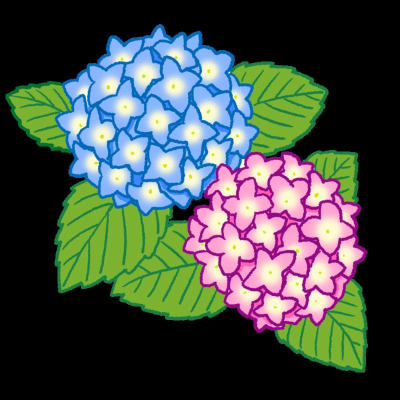 紫陽花のイラスト