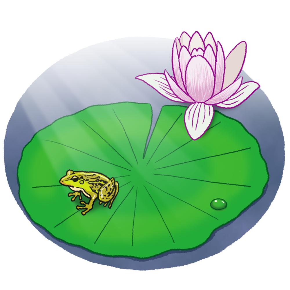 ハスとカエルのイラスト(花付き)