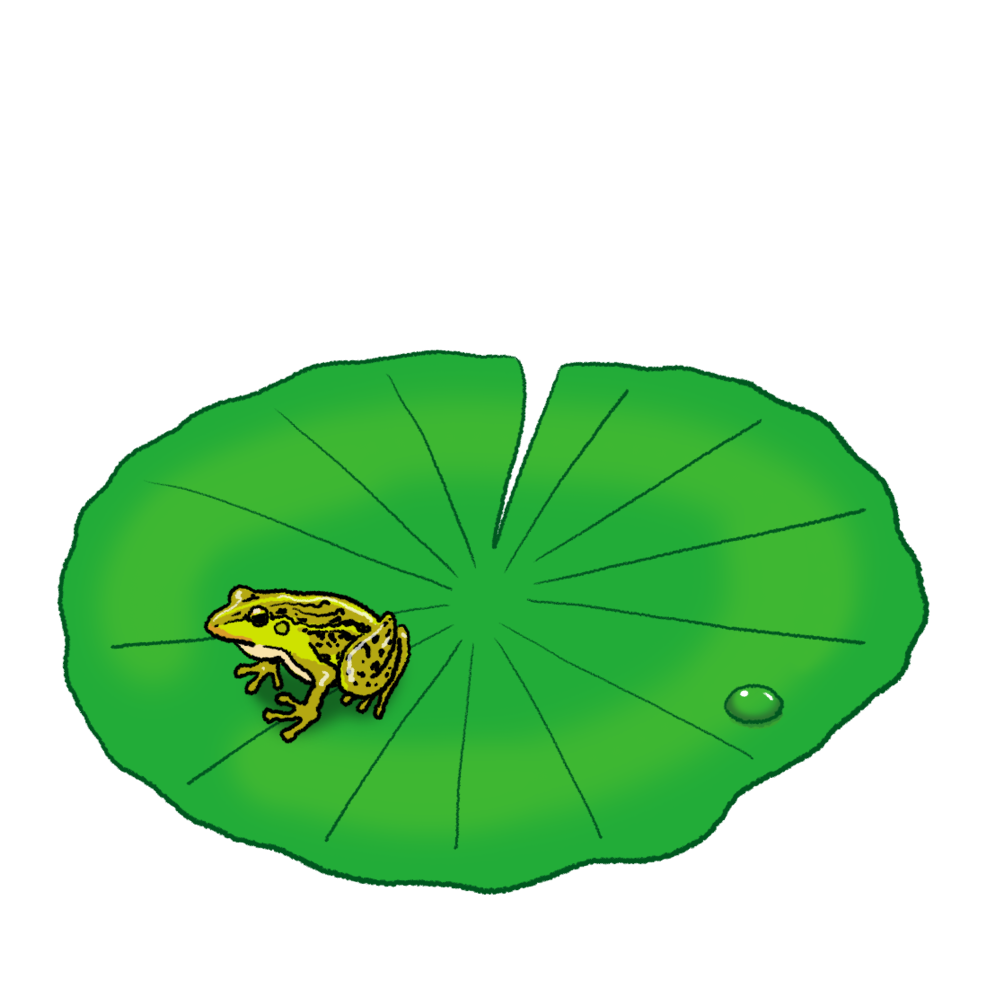 ハスとカエルのイラスト